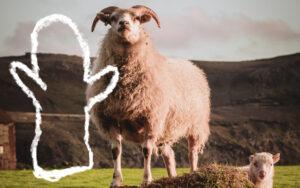 Lammas ja lapanen