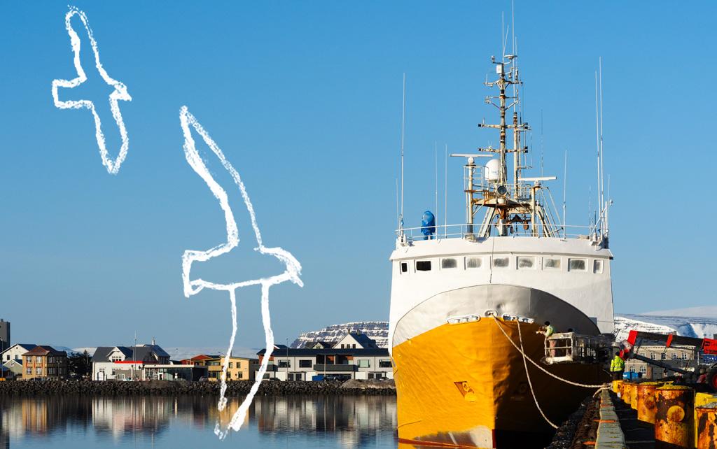 Lintuja ja keltainen laiva Ísafjörðurissa Kuva: Terhi Ilosaari, piirrokset: Sofia Kivistö