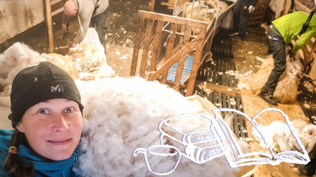 Islantilainen lanka ja keritsemistalkoot Kuva: Terhi Ilosaari