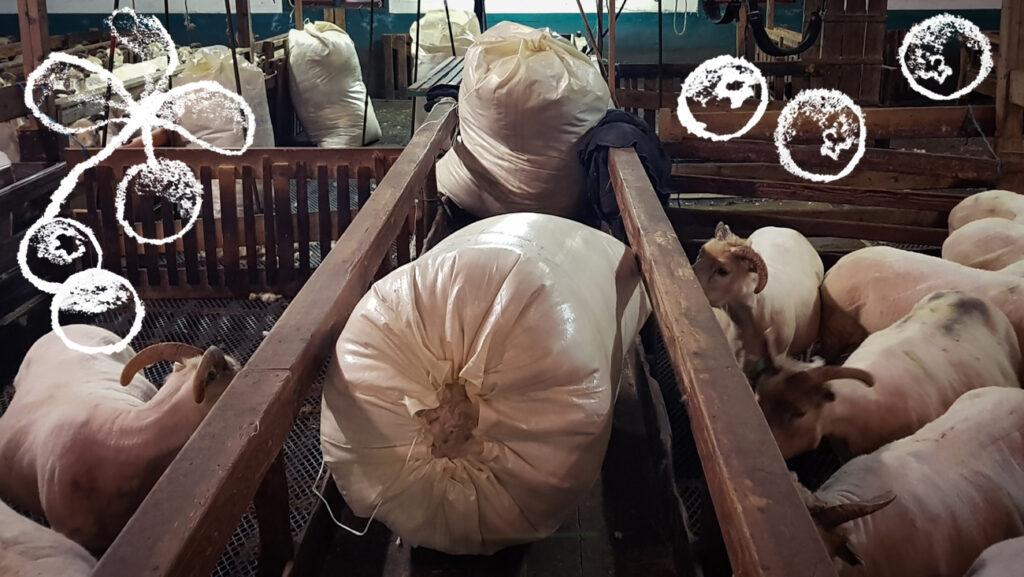 Islantilainen lanka ja raaka-aine - villasäkkejä lampolan käytävällä Kuva: Terhi Ilosaari